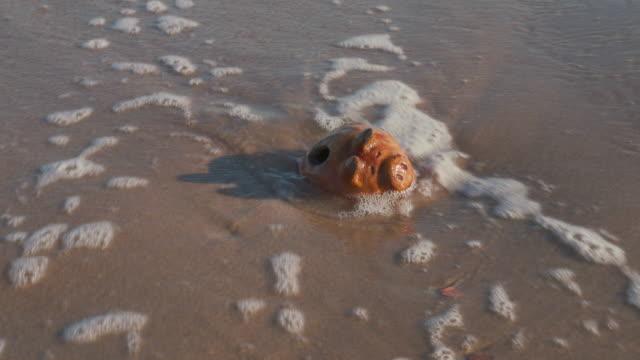 隠された宝は海によって発見される。ビーチでのサーフでヴィンテージアンティーク貯金箱とコイン。波が来て、砂の上にコインバンクとお金を残して、行きます。 - 宝探し点の映像素材/bロール