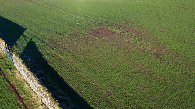 the high angle aerial view of new growth in a crop seeded in late autumn in a field in dumfries and galloway - in a row stock videos & royalty-free footage