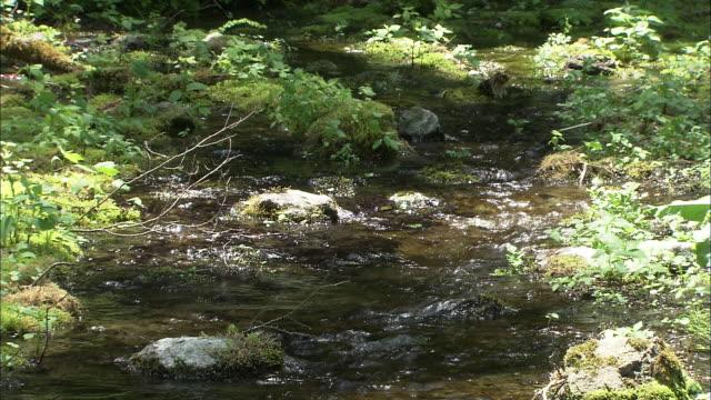 vídeos de stock, filmes e b-roll de the himekawa riverhead - riacho