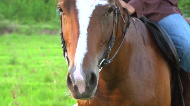 Het paard in harnas. Ruiter. Ruiter in het zadel op het paard