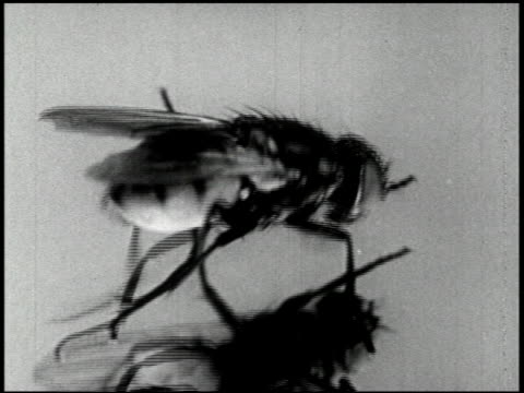 the house fly (2nd edition) - 3 of 15 - see other clips from this shoot 2454 stock videos & royalty-free footage