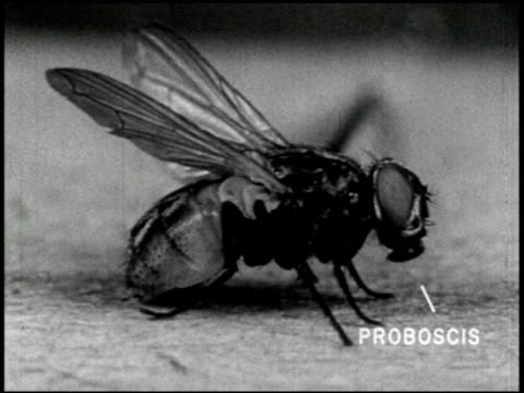 the house fly (2nd edition) - 4 of 15 - see other clips from this shoot 2454 stock videos & royalty-free footage