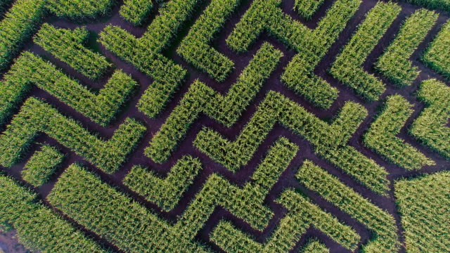 the huge halloween's corn maze in pennsylvania, poconos region. directly above aerial drone video - maze stock videos & royalty-free footage