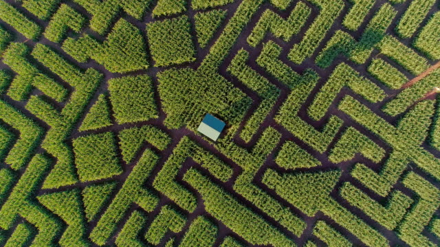 The huge Halloween's Corn Maze in Pennsylvania, Poconos Region. Directly above aerial drone video