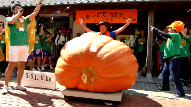the huge pumpkin weighing 561.6 kilograms won japan's heaviest pumpkin competition held on september 20 in shodoshima island in western japan kagawa... - biggest stock videos & royalty-free footage