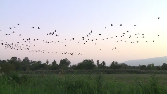 The Hula Valley valley in northern Israel is a main stopover for migrating birds it is estimated that around 500 million birds make their way through...