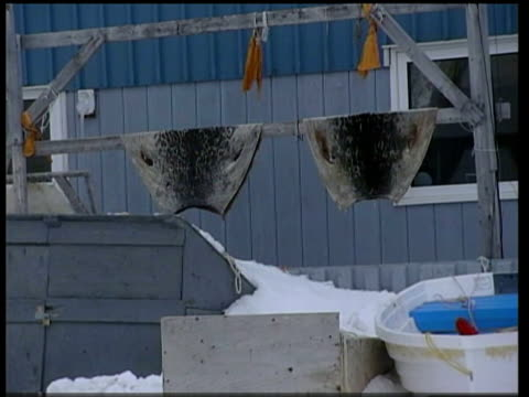 vídeos de stock e filmes b-roll de the impact of global warming on the inuit community; baffin island: seal fur hanging outside inuit house - inuit