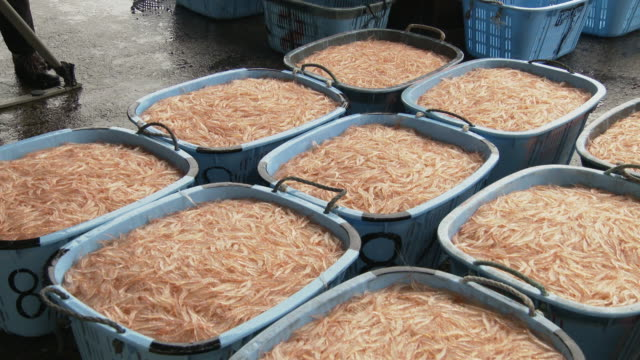 4k: the japanese glass shrimp fishing season begins - エビ料理点の映像素材/bロール