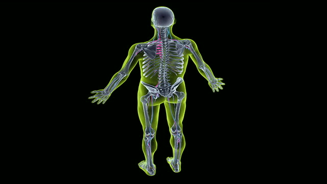 the jugular veins - menschlicher hals stock-videos und b-roll-filmmaterial