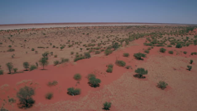 vídeos de stock e filmes b-roll de the kalahari desert - arbusto
