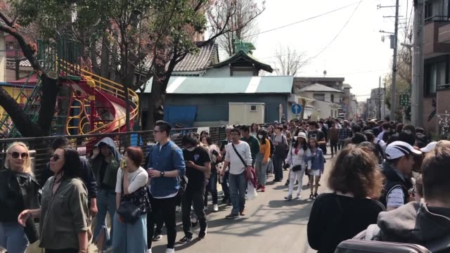 the kanamara festival is held annually on the first sunday of april. the penis is the central theme of the festival, frequented by prostitutes who... - penis stock videos & royalty-free footage