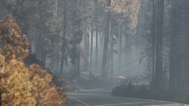 the king fire that burned 97,717 acres of the el dorado national forest in california, usa. following an unprecedented four year long drought, wild fires are much more common. most of california is in exceptional drought, the highest level of drought class - burnt stock videos & royalty-free footage