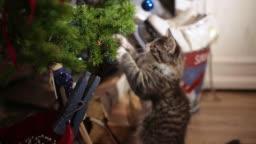 the kitten on the Christmas tree, Christmas