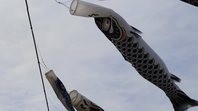 the koi fish flag is moving because of the wind. decoration in the japanese cherry blossoms festival.slow motion. - koi carp stock videos & royalty-free footage