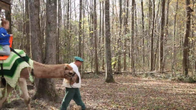 stockvideo's en b-roll-footage met the last weekend of the carolina renaissance festival is wrapping up as visitors enjoy the atmosphere, food, entertainment and games. - festivalganger