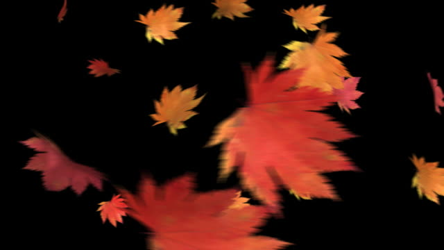 the leaf to dance-hd 1080 loop+alpha - autumn leaf color stock videos and b-roll footage