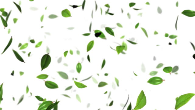 das blatt zu dance-hd - blatt pflanzenbestandteile stock-videos und b-roll-filmmaterial