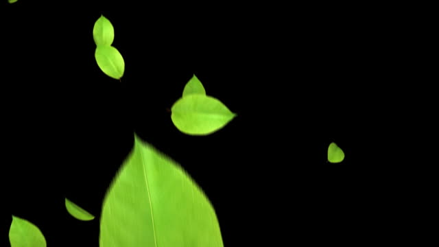 the leaf to dance-v hd 1080 loop+alpha - hovering stock videos & royalty-free footage