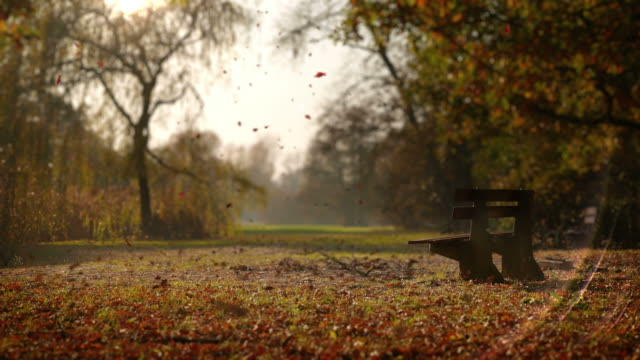the leaves fall in autumn park. lonely bench - autumn stock videos & royalty-free footage