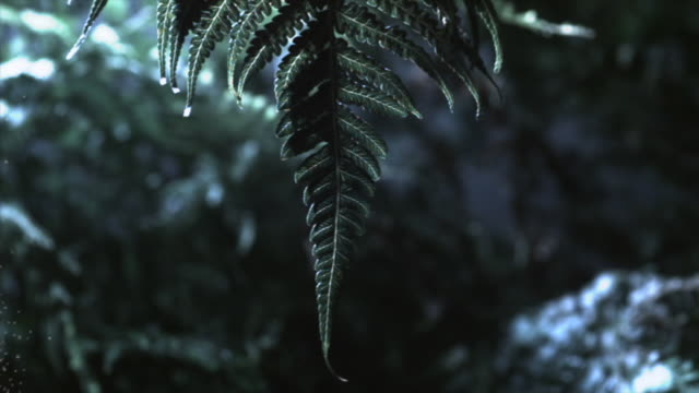 the leaves of fern plants release spores in a gentle breeze. available in hd. - spore stock videos and b-roll footage