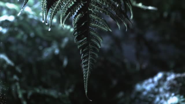 vídeos de stock, filmes e b-roll de the leaves of fern plants release spores in a gentle breeze. available in hd. - processo vegetal