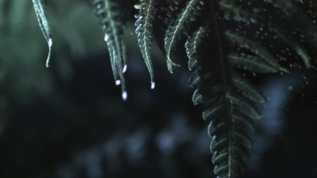 The leaves of fern plants release spores in a gentle breeze. Available in HD.