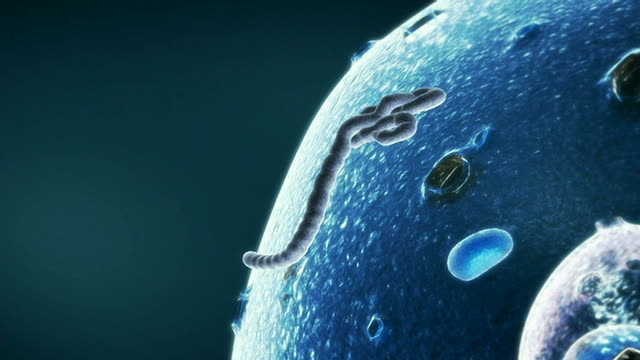 the life cycle of the e.bola virus (part 1 of 2) - life cycle stock videos & royalty-free footage