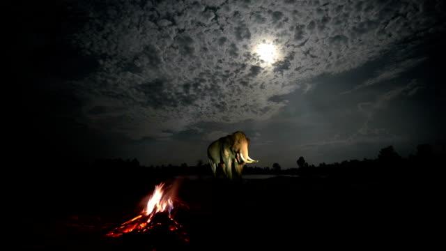 das leben der asiatischen elefanten - lateinamerika stock-videos und b-roll-filmmaterial