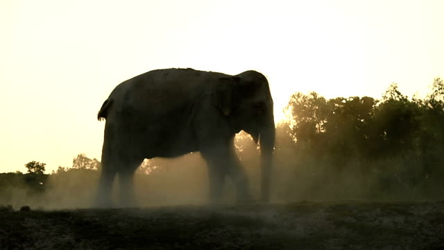 the life of asian elephant - back lit stock videos & royalty-free footage