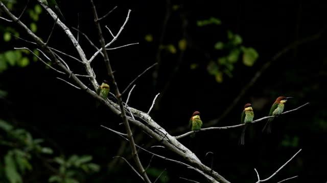 stockvideo's en b-roll-footage met het leven van vogels - menselijke ruggengraat