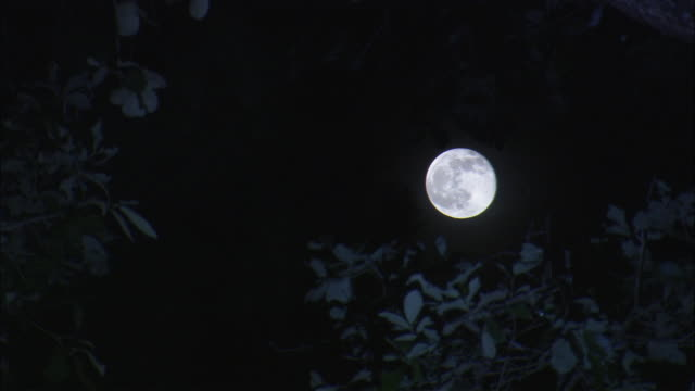 the light of a full moon falls on tree leaves. - full moon stock videos & royalty-free footage