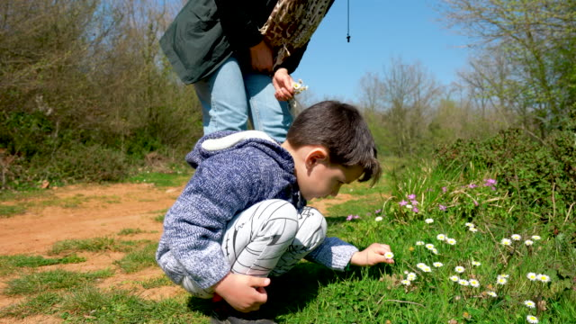 the little cute boy collects daisy flowers for mom - 4 5 years stock videos & royalty-free footage