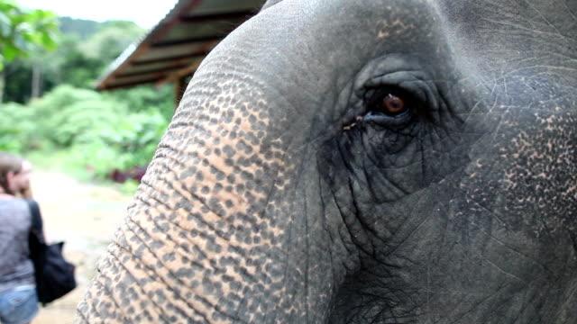 the little girl is feeding the elephant bananas. - thailand stock-videos und b-roll-filmmaterial