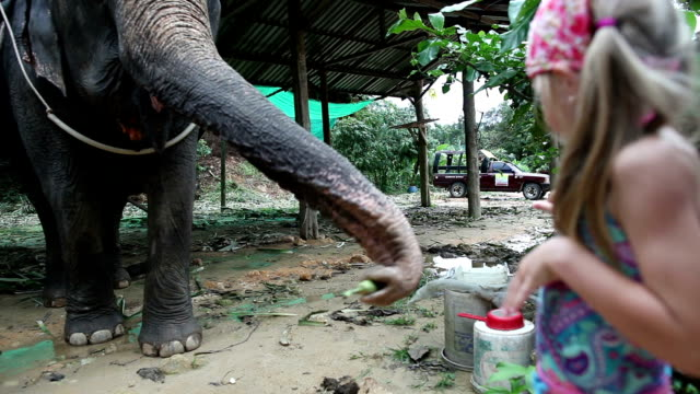 the little girl is feeding the elephant bananas. - trat province stock videos and b-roll footage
