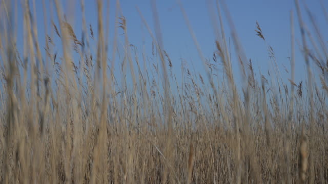 The Long grass and wetlands