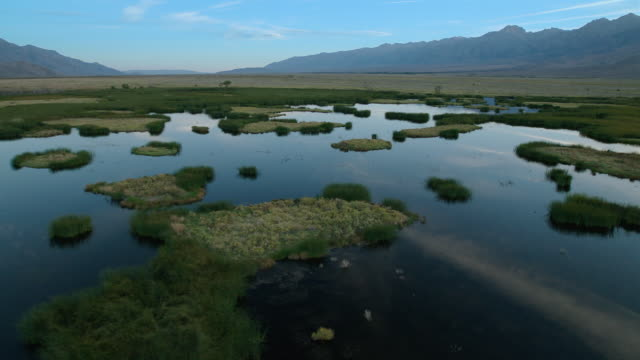 vídeos de stock, filmes e b-roll de the lower owens river project restores waterfowl habitat along the owens river which was desiccated with the creation of the los angeles aqueduct in the early 20th century. - pântano salgado