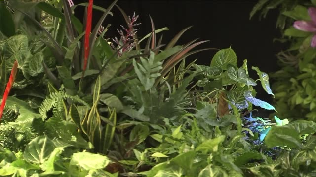 The Lowline Lab is a longterm open laboratory and technical exhibit designed to test and showcase how the Lowline will grow and sustain plants...