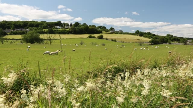 the lyth valley in south cumbria, uk. - sheep stock videos & royalty-free footage