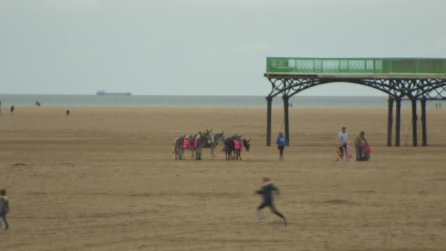the lytham st annes coast - horse family stock videos & royalty-free footage