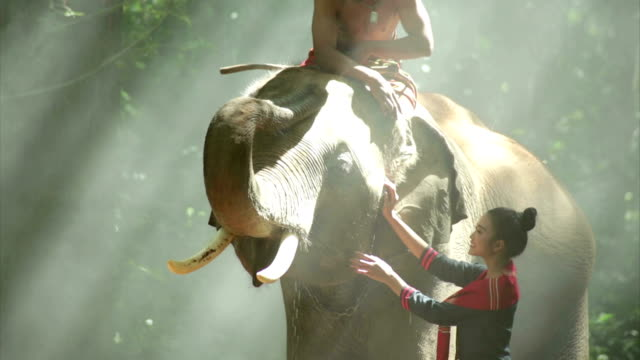 the mahout and woman - cambodia stock videos and b-roll footage