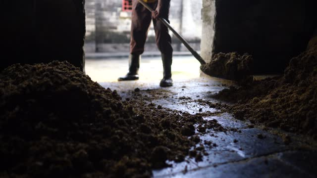 the making process of lidu sorghum liquor in lidu town - sorghum stock videos & royalty-free footage