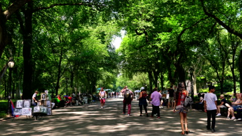the mall and literary walk, people, central park - public park stock videos & royalty-free footage