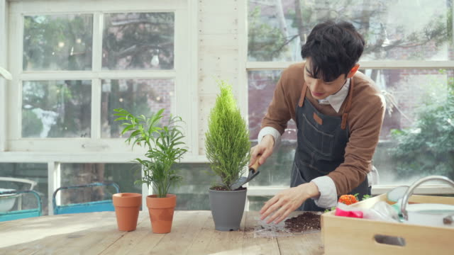the man puts the dirt in the flowerpot in the home - home showcase interior stock videos & royalty-free footage