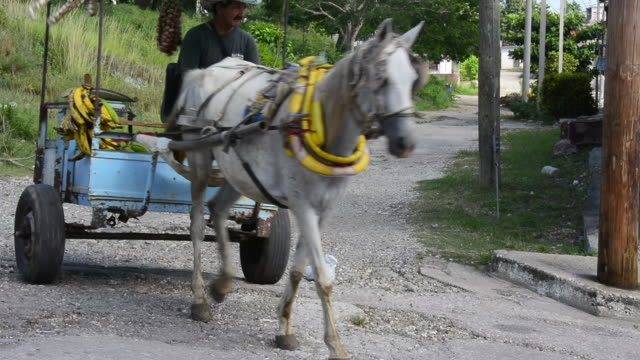 the man uses a horse-drawn cart to transport the produce. there is only one large private large produce market in the city. that market has more... - horsedrawn stock videos & royalty-free footage