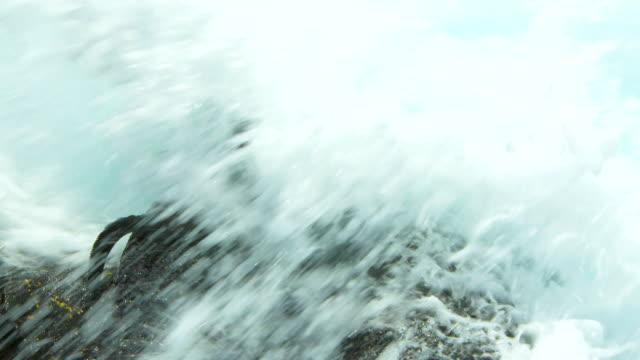 vídeos y material grabado en eventos de stock de the marine iguana splashed with water in galapagos islands - iguana de los galápagos