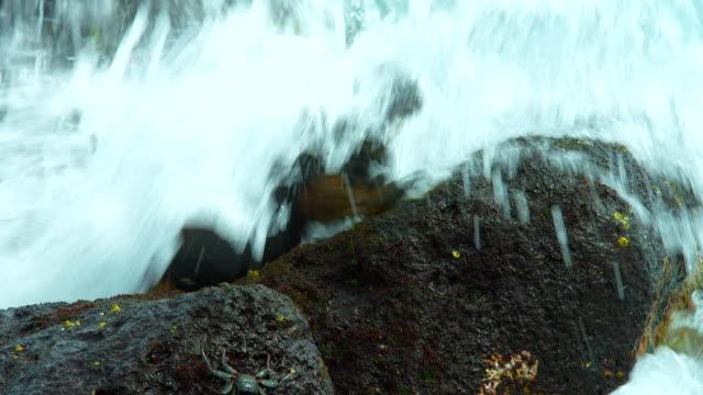 the marine iguana splashed with water in galapagos islands - ガラパゴスリクイグアナ点の映像素材/bロール