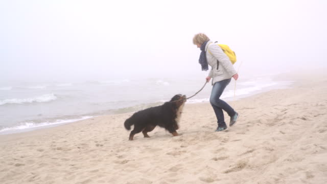 the mature 50-years-old woman playing with the belgian mountain dog at the beach - baltic sea stock videos & royalty-free footage