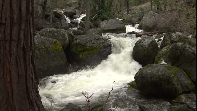 the merced river flows through a forest and over boulders in yosemite national park, california. - merced fluss stock-videos und b-roll-filmmaterial