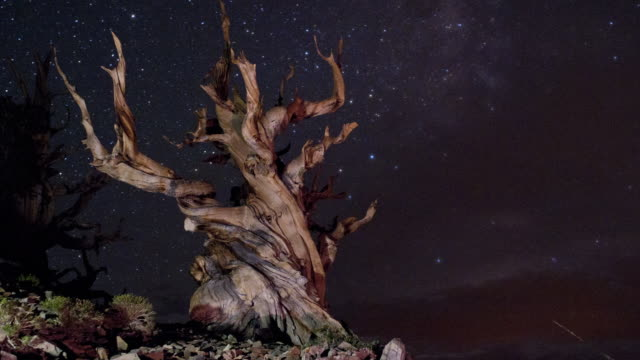 The Milky Way and cloud move over an ancient bristlecone pine in the White Mountains of California