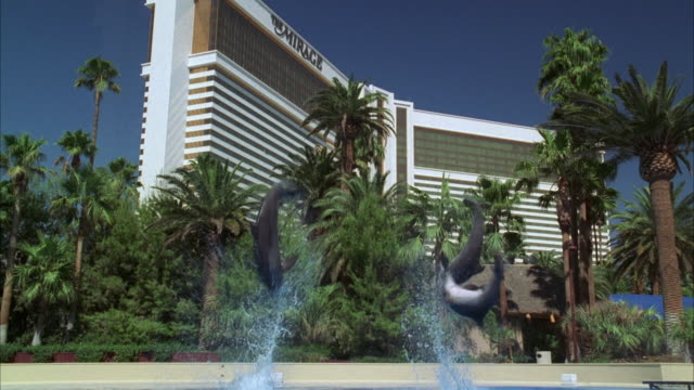 ws 'the mirage hotel and casino' with dolphin doing flips in pool in foreground / las vegas, nevada, usa - the mirage las vegas stock videos & royalty-free footage